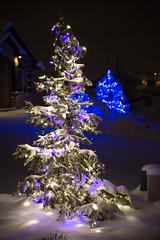 C7 LED Bulbs (Christmas World) Tags: lighting christmas blue light house holiday snow tree led mo event incandescent slo c9 c7 christmaslites christmaslitescom