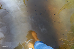 (33 Photography) Tags: light shadow lake forest surface  barefoot lightandshadow tadpole nantou         lakesurface nantouhsien
