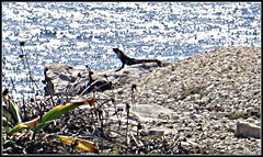 2208367120_7d9de7cc8c_o (gray.florie) Tags: ocean cliff mexico gray iguana mujeres florie appenninosettentrionalealpinatura