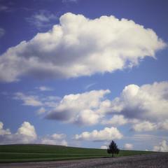 Ceci n'est pas une marguerite (photofabulation) Tags: sky tree clouds landscape switzerland europa europe suisse ciel nuages paysage arbre vaud romandie fujixe2