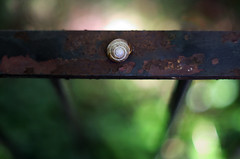 Snail. (Alex takes photos.) Tags: guy green glass lines vintage fence out lens gold nikon focus iron shoot dof open little bokeh wide shell snail made nikkor ever fastest f12 oof wrought d610 wrout elading ~oof