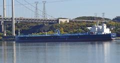 Minerva Gloria (Jacques Trempe 2,360K hits - Merci-Thanks) Tags: river ship quebec gloria stlawrence stlaurent minerva fleuve navire stefoy