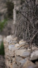 You are building all these layers and walls, but who is supposed to protect you from your ownself? (M Yasir B.) Tags: nature garden thought twigs lattice quetta balochistan ziarat protectivewall unseenbalochistan