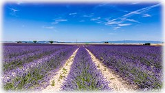 AL-Lavande-Valensole-20150626-015.jpg (Shoot Enraw) Tags: champs provence 26juin lavandes valensole 18200mmf3556 1116mmf28