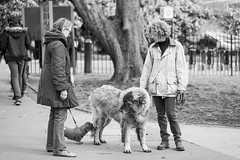 20170307_F0001: Big (wfxue) Tags: pet dog size dogwalker dogs street park lawn tree people candid blackandwhite bw