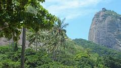 O verde fascinante. (LuãAlves) Tags: verde mata urca pão de açúcas bondinho beleza natureza nature