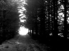 Wooded Hillside