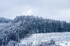 IMGP5712 (laurec.) Tags: luge neige oppenau