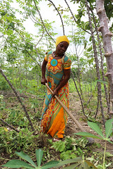 Woman works in her cassava field in Mkuranga district, Tanzania. Photo H.Holmes/RTB