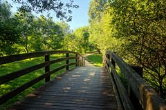 wooden bridge on park (Mimadeo) Tags: park wood bridge summer plant color tree green nature grass forest garden way landscape wooden leaf spring natural outdoor path walk scenic peaceful sunny scene foliage trail walkway footpath tranquil pathway