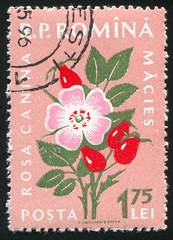 Romania 1359 m (roook76) Tags: old dog plant flower nature floral beautiful beauty rose vintage botanical stem ancient flora message mail natural blossom antique postcard historic retro stamp petal seal romania envelope bloom letter florist aged botany postage 1959 postmark philately