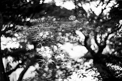 Japanese Gardens -- Brooklyn Botanical Gardens I (Ryan M Long Photography) Tags: new leica york city nyc white ny black classic film home 35mm silver do kodak tmax f14 voigtlander rangefinder it 150 400 nyny agfa rodinal yourself m6 nokton tmy develop