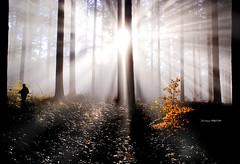 Haya ante el resplandor (Jabi Artaraz) Tags: light naturaleza luz maana nature contraluz jon natura amarillo bizkaia niebla euskalherria vizcaya basquecountry haya paysbasque bosques bruma arbolito argia basoa pagoa abetos resplandor euskoflickr superaplus aplusphoto jartaraz