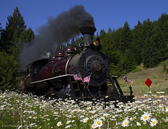 Steaming through the daisies (Patrick Dirden) Tags: california railroad flowers blue green northerncalifornia daisies train blw northwest smoke meadow rail steam daisy pacificnorthwest mikado redwoods steamengine fortbragg backwoods northcoast skunktrain steamlocomotive passengertrain 282 mendocinocounty shortline californiawestern fortbraggca baldwinlocomotiveworks ranchca californiawesternrailroad mikadolocomotive californiawestern45 cwr45