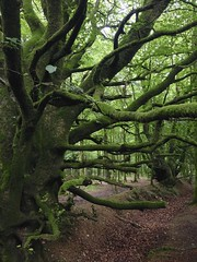 Devon woodland flora and fauna (Winniepix) Tags: wood uk tree green nature leaves forest woodland outdoors moss branch branches bark lichen twisted