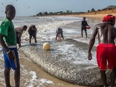 A Good Haul (Makgobokgobo) Tags: africa people beach sussex hamilton sierraleone peninsula francos freetown westernarea