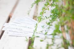 (Melissa - Valdez) Tags: plant 50mm reflex nikon thyme timo pianta 50mm18 d90 nikonreflex