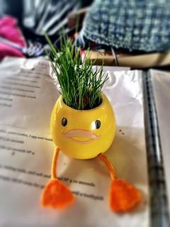 Grass Head Egg