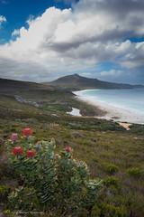 Mount Many Peaks - Albany, Western Australia (Philip Schubert IMAGES) Tags: beach landscape australia granite albany inlet banksia moutain westernaustralia normans cheynes waychinicup manypeaks