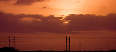 Peaceful (m..k..) Tags: city sunset sun color silhouette clouds canon evening wire tel pole telephoto wires 550d 55250