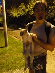 Mina Clavero stray cat