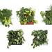 tableaux végétaux © Flowall