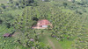 GWD Forestry coconut forestry investment project (GWD Forestry - Brazil) Tags: forestry invest gwm gwdforestry