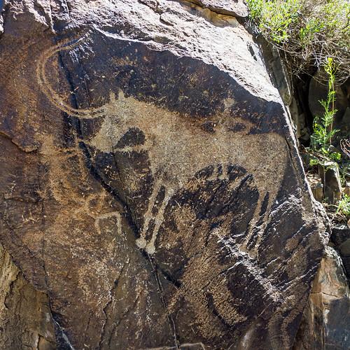 hunters + animal petroglyphs (Tamgaly - Kazakhstan)