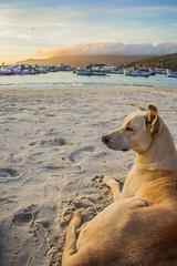 Dog - Praia dos Anjos (Mandycst) Tags: ocean people beach landscape pessoas rj paisagem arraialdocabo