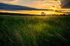Sunset in the field (Tom Draxler) Tags: light sunset sun green clouds germany sonnenuntergang walk sony alb fe fullframe leafes reutlingen