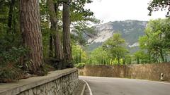 Road from Yalta to the Ai-Petri mountain (Kireelyaus) Tags: road mountain nature pine forest crimea россия крым таврия
