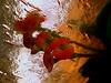 Espina de Cristo. / Euphorbia milii splendens. (Bernardo del Palacio) Tags: santiago color reflections contraluz ego catedral ciudad cathédrale santiagodecompostela compostela reflejo sanmarcos reflexions breathtaking semanasanta reflejos cathedrale bestofthebest sanisidoro amazingcolors reflects gotico gotic musac dinnerandamovie blueribbonwinner artisticexpression rosetón jacobeo mouseion reflejada digitalcameraclub cherryontop 5photosaday kartpostal golddragon abigfave perfectangle anawesomeshot flickrplatinum blueribbonwinne superbmasterpiece digitalphotoart diamondclassphotographer amazingamateur theunforgettablepictures brillianteyejewel platinumheartaward betterthangood goldstaraward internationalgeographic photoexplore academyofphotographyparadiso bestminimalshot multimegashot explorewinnersoftheworld alwayscomment5 inspiredbyhim musacmuseo breathtakinggoldaward awesomeblossoms cathol 100commentgroup inspiringgallery photoartbloggroup berpala dragondaggerphot dragondaggerphoto dragondaggerawards graphicmaster