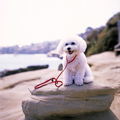 (Daniel Regner) Tags: ocean california ca dog west cute 120 mamiya film beach june analog vintage coast san fuji scanner diego slide iso velvia overexposed epson asa 50 expired 2014 c330 2011 v500