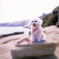 (Daniel Regner) Tags: ocean california ca dog west cute 120 mamiya film beach june analog vintage coast san fuji scanner diego slide iso velvia overexposed epson asa 50 expired 2014 c330 2011 v500