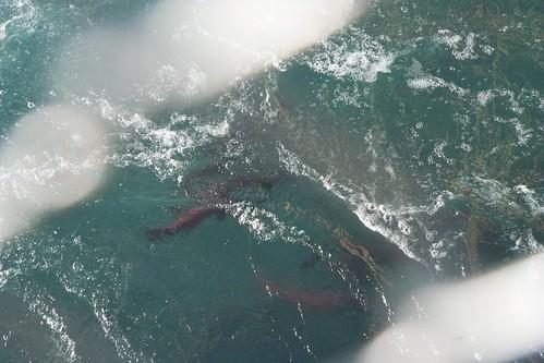 fish7 2014-08-15 at 20-43-48