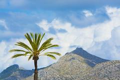 Palm tree (@lattefarsan) Tags: sky nature clouds landscape palmtree mallorca