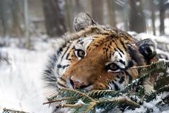 2014-01-29 Snow Aria (149)
