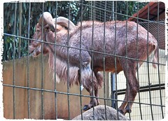 Image5 - Copia (Daniel.N.Jr) Tags: animal selvagem zoologico kodakz990
