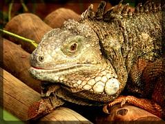 Image30 - Copia (Daniel.N.Jr) Tags: animal selvagem zoologico kodakz990