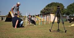 DSC_0092 (Clube de Cãompo Hotel Fazenda para Cães) Tags: votorantim estimacão hotelfazendaparacães clubedecãompohotelfazendaparacães