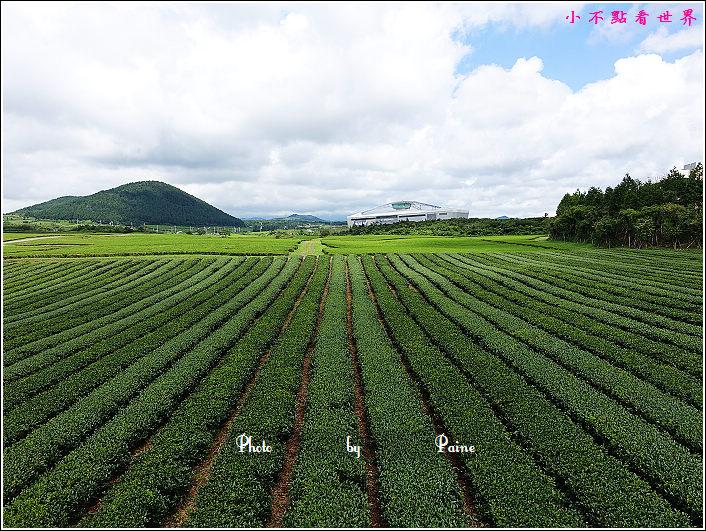 濟州島innisfree館 綠茶博物館 (69).JPG