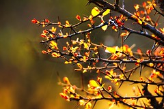 Vibrancy and Fragrance (prasad_natarajan) Tags: morning sunlight colors photography photo spring canonslr mudhumalai firstrays tamron150600mm prasadnatarajan