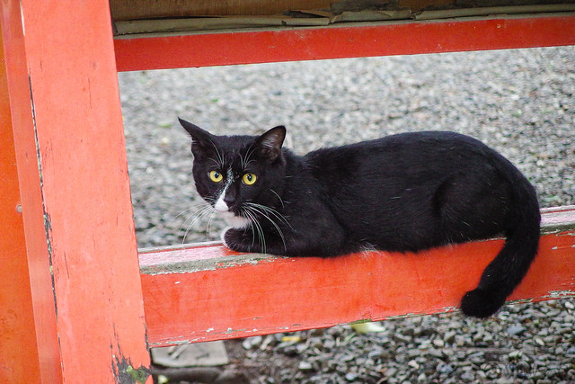 Today's Cat@2014-09-01
