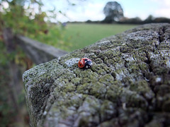 Lady Bird (Frederic F) Tags: insect wildlife ladybird