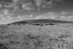 Masai Mara (João.Martins) Tags: africa sunset nature landscape landscapes kenya safari mara masai masaimara áfrica quenia quénia