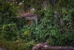 (Explored) The Reclamation: Almost Already Gone - Mount Airy, Maryland - August 31, 2014 (skipcoblyn) Tags: old house tree abandoned overgrown clouds rural nikon decay gothic ruin maryland mount southern nik airy lightroom d90