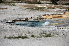 Improbable Geyser (8 July 2014) (James St. John) Tags: improbable geyser hill group upper basin yellowstone hotspot volcano wyoming geysers hot spring springs