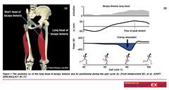 62MD20 (sportEX journals) Tags: rehabilitation hamstring sportsmedicine sportex sportsinjury sportexmedicine sportsrehabilitation
