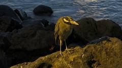 Galapagos - San Cristobal-54
