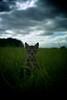 * (Timoleon Vieta II) Tags: leica wild portrait pet storm colour cat kitten meadow rangefinder baku savannah freind bengal individuality timoleon